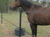 Cover those iron posts with high pressure polypipe, a great solution to provide a safer environment for your horses